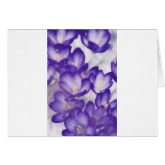 Lavender Crocus Flower Patch Card