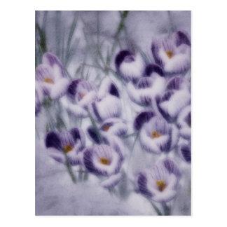 Lavender Crocus Patch Postcard