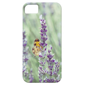 Lavender Daze iPhone 5 Cover