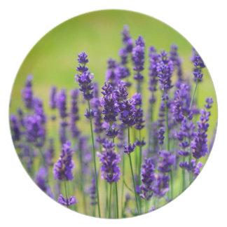 Lavender Dinner Plate