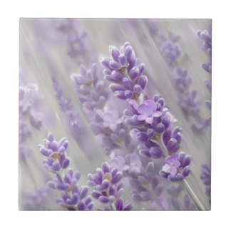 Lavender dreams. tile