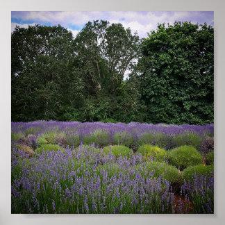 Lavender Farm Poster