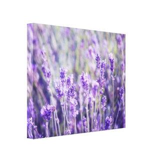 Lavender Field Floral Canvas Print