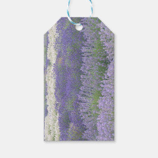 Lavender Field Gift Tag Pack Of Gift Tags