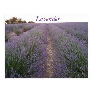 Lavender field postcard