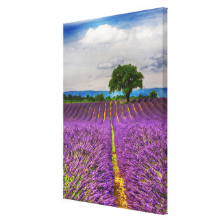 Lavender Field scenic, France Canvas Print