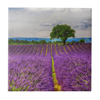 Lavender Field scenic, France Ceramic Tiles