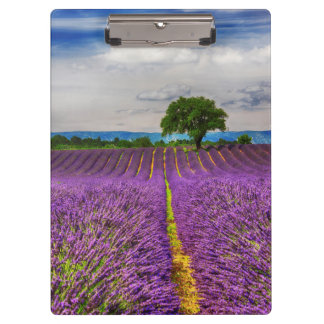 Lavender Field scenic, France Clipboards