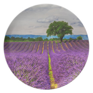 Lavender Field scenic, France Dinner Plates