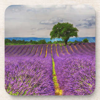 Lavender Field scenic, France Drink Coasters