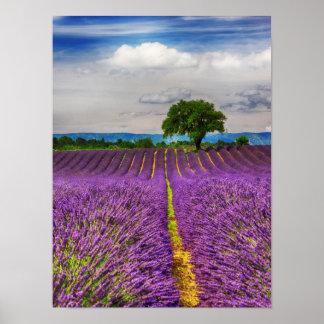 Lavender Field scenic, France Poster