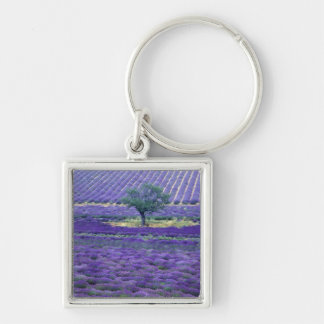 Lavender fields, Vence, Provence, France Silver-Colored Square Keychain