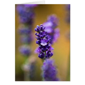 Lavender flower macro photography card