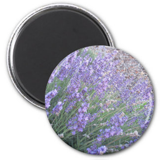 Lavender Flower Round Magnet | Herb Plant Photo