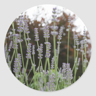 Lavender Flower Round Stickers