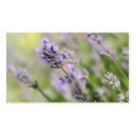 Lavender Flowers. Business Card