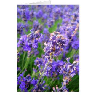 Lavender flowers - Card
