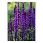Lavender Flowers Card