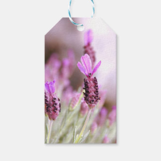 Lavender Gift Tag Pack Of Gift Tags