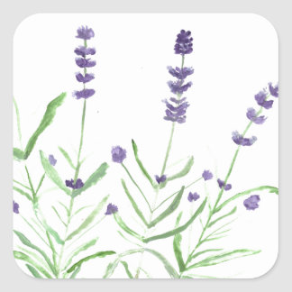 Lavender herb botanical print square sticker