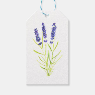 Lavender herb Lavender flowers watercolour Gift Tags