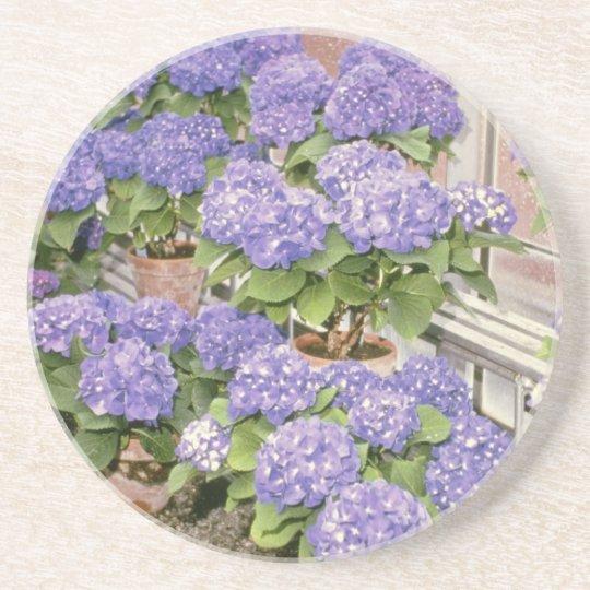 Lavender Hydrangea Macrophylla 'Enziandom' flowers Coaster