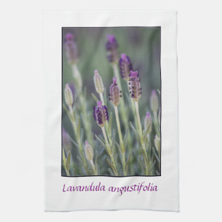 Lavender in Bloom Kitchen Towel