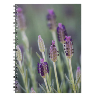 Lavender in Bloom Spiral Notebook