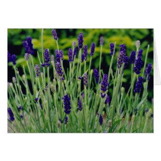 Lavender in Dublin, Ireland Card