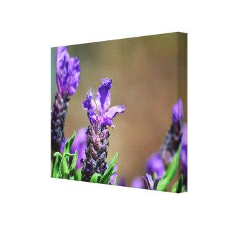 Lavender in flowering canvas print