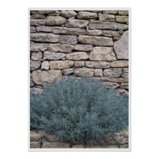 Lavender on Stone Poster