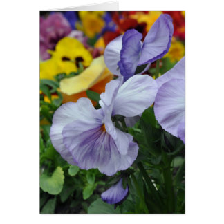 Lavender Pansies Card