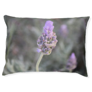 Lavender Photograph Soft and Pretty Pet Bed