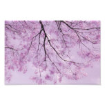 Lavender Purple Tree Photograph