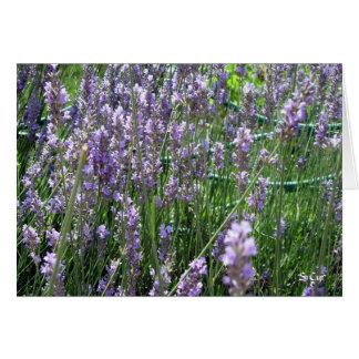 Lavender, S Cyr Card