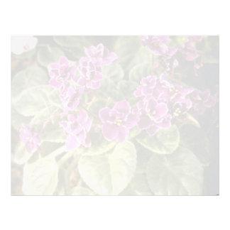 Lavender Saintpaulia 'Purple Choice' (African Viol Letterhead Template