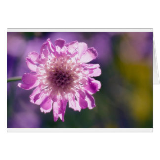 Lavender Scabiosa Flower Card
