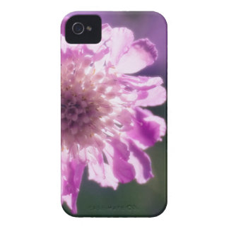 Lavender Scabiosa Flower Case-Mate iPhone 4 Cases
