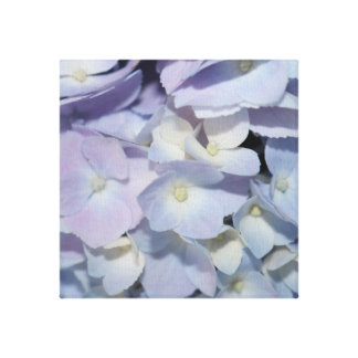 Lavender Sweet Hydrangea on Wrapped Canvas (12x12)