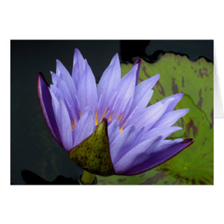 Lavender Water Lily Card
