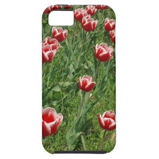 Lawn with red tulips closeup iPhone 5 covers