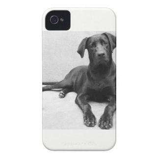 Layer iPhone 4 Labrador Case-Mate iPhone 4 Cases