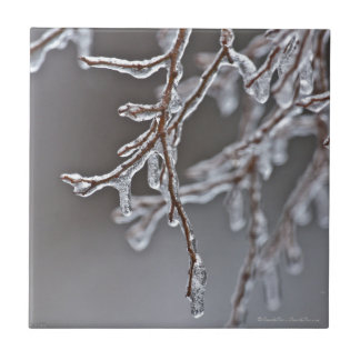 Layered Ice Branches on the Trail Tile