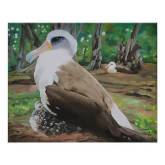 Laysan Albatross and Chick Poster