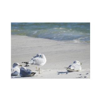 Lazy Beach Birds Canvas Art