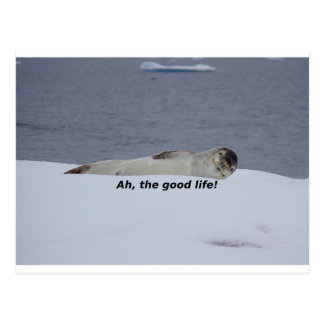 "Lazy Beach Bum Seal: ""Ah, the good life!"" Postcard"