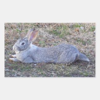 Lazy Bunny Stickers