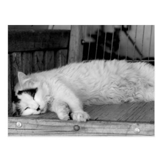 Lazy Cat Days Postcard