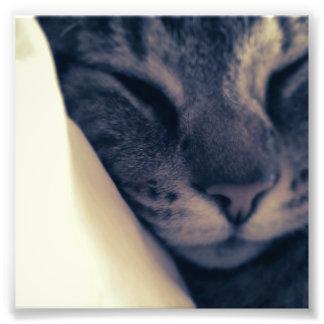 Lazy Cat Photo Print