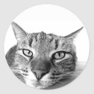 Lazy Cat Stickers